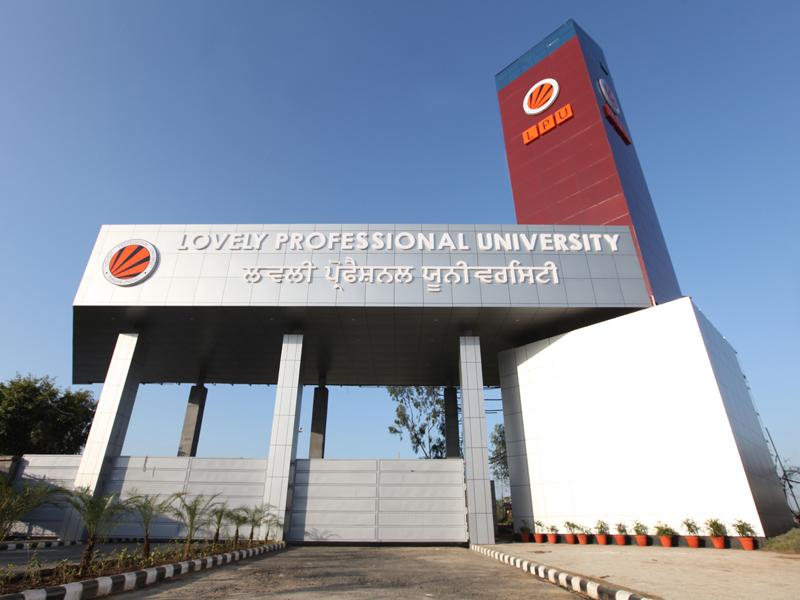 professional university term paper